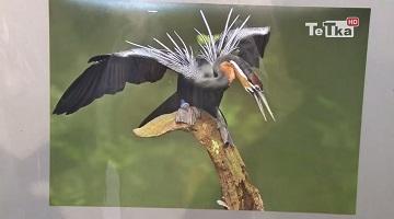 ptaki Stacha Borkowskiego