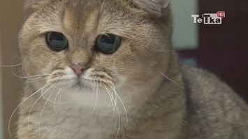 Pokaz Kotów Rasowych