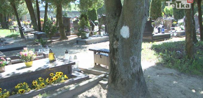 drzewo na cmentarzu