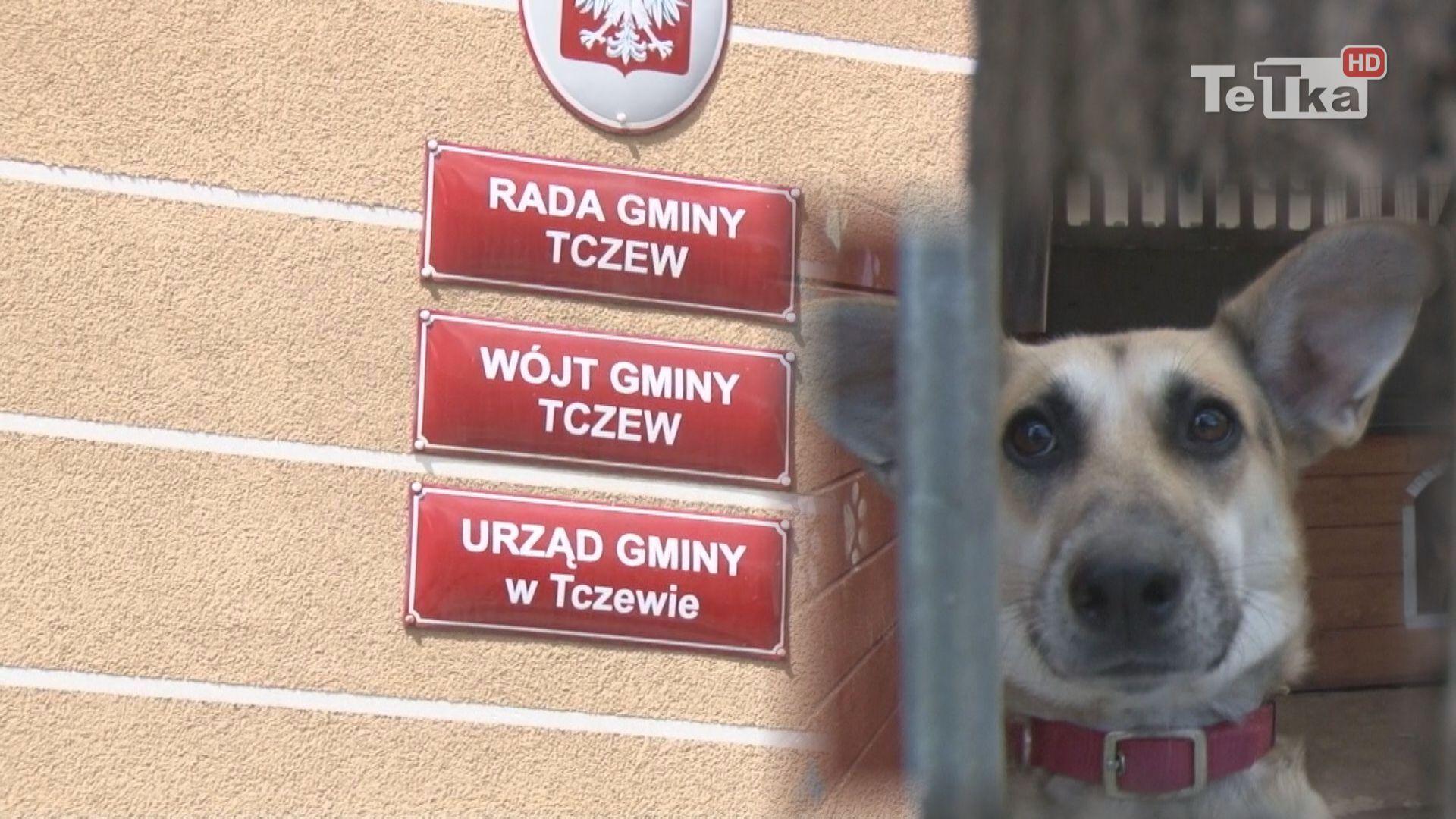 psy trafiają do Kościerzyny