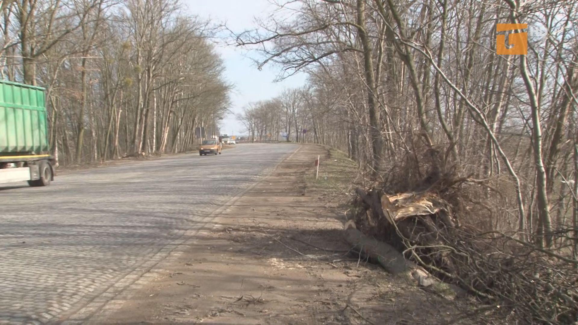 Wycięli tysiąc pięćset drzew