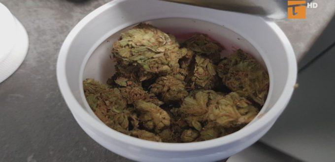 Medyczna marihuana dostępna w Tczewie