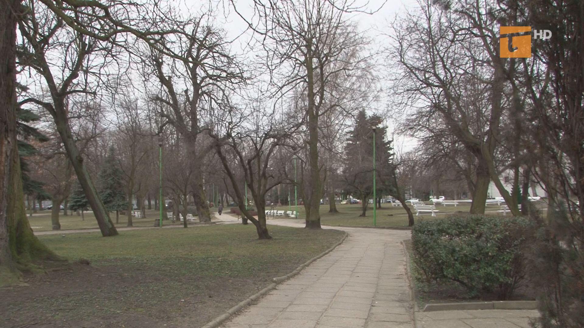 Już w lutym prowadzone były prace pielęgnacyjne drzew