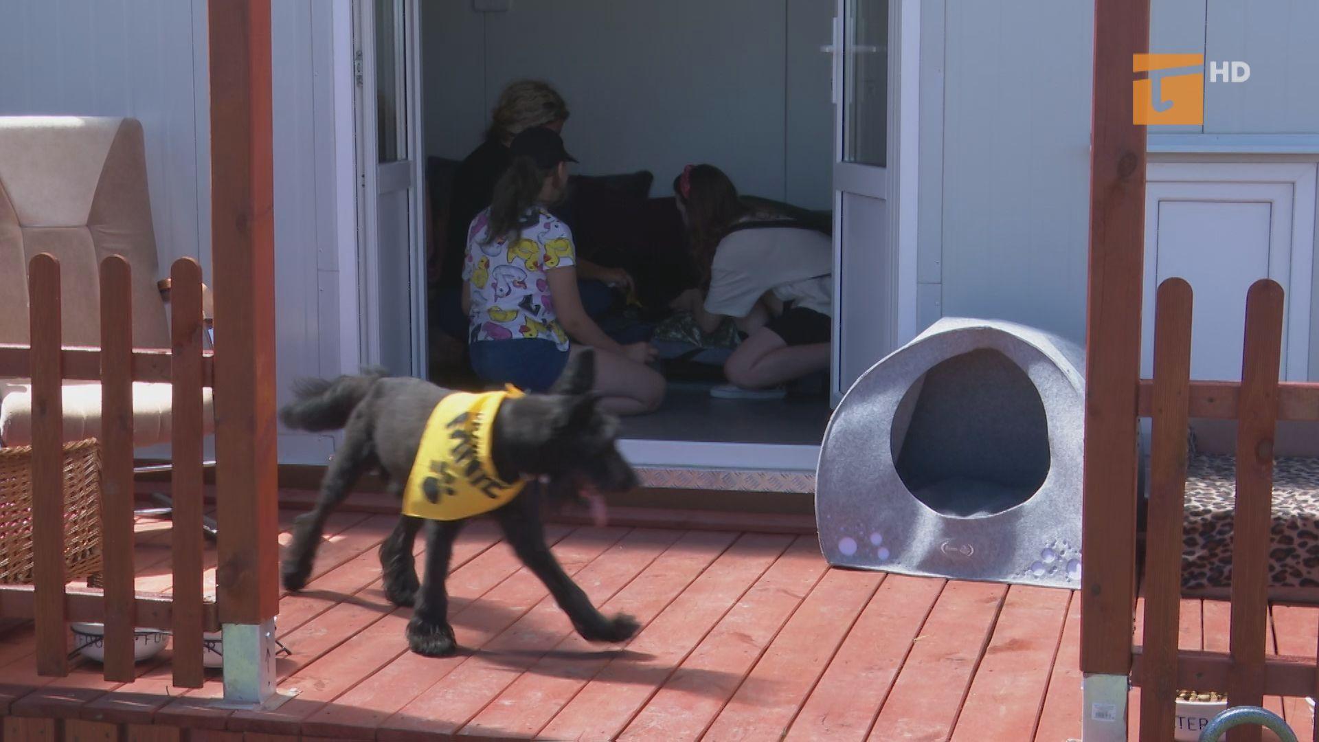 Psi seniorzy w nowym domku