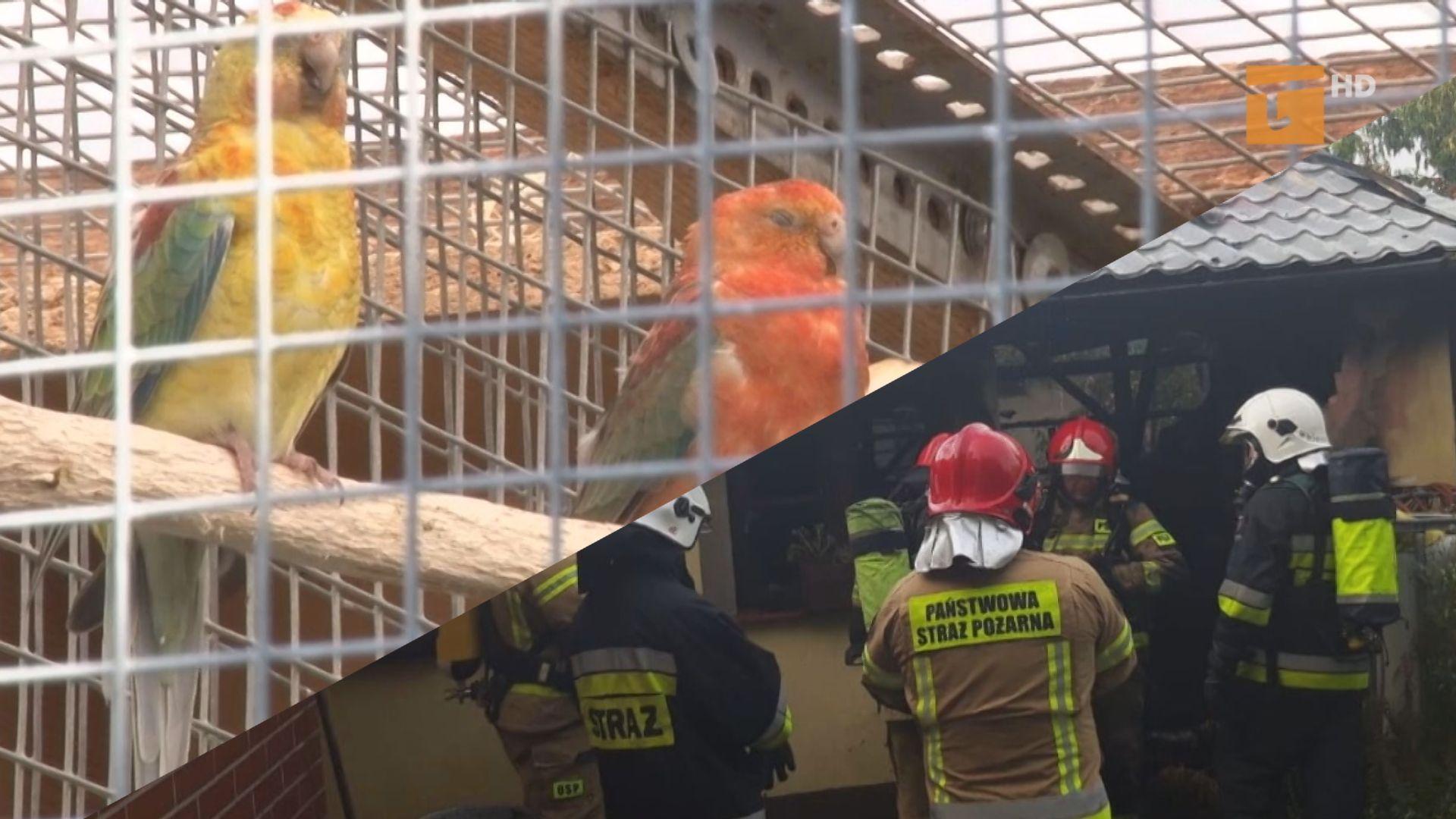 Spłonęła hodowla ptaków egzotycznych