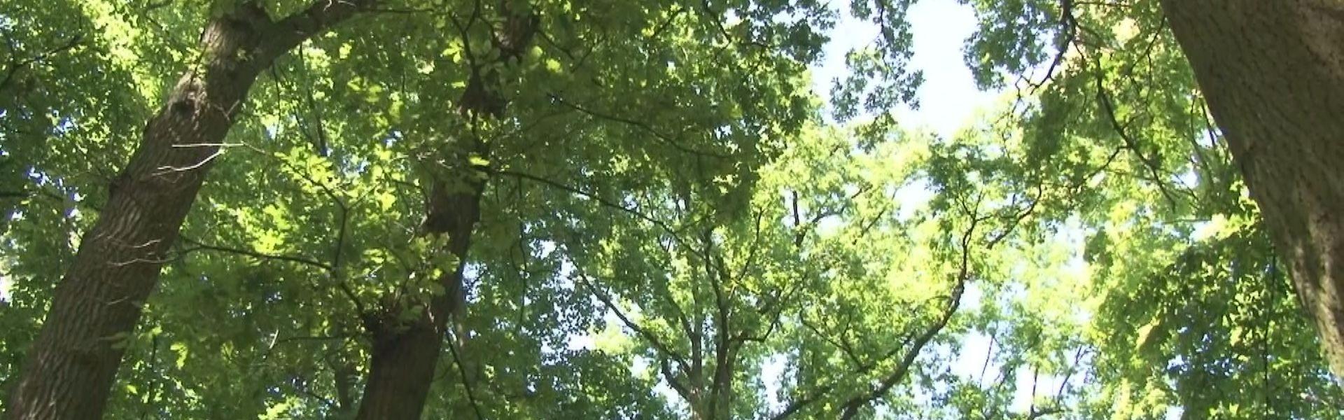 Tczew zyska nowe pomniki przyrody
